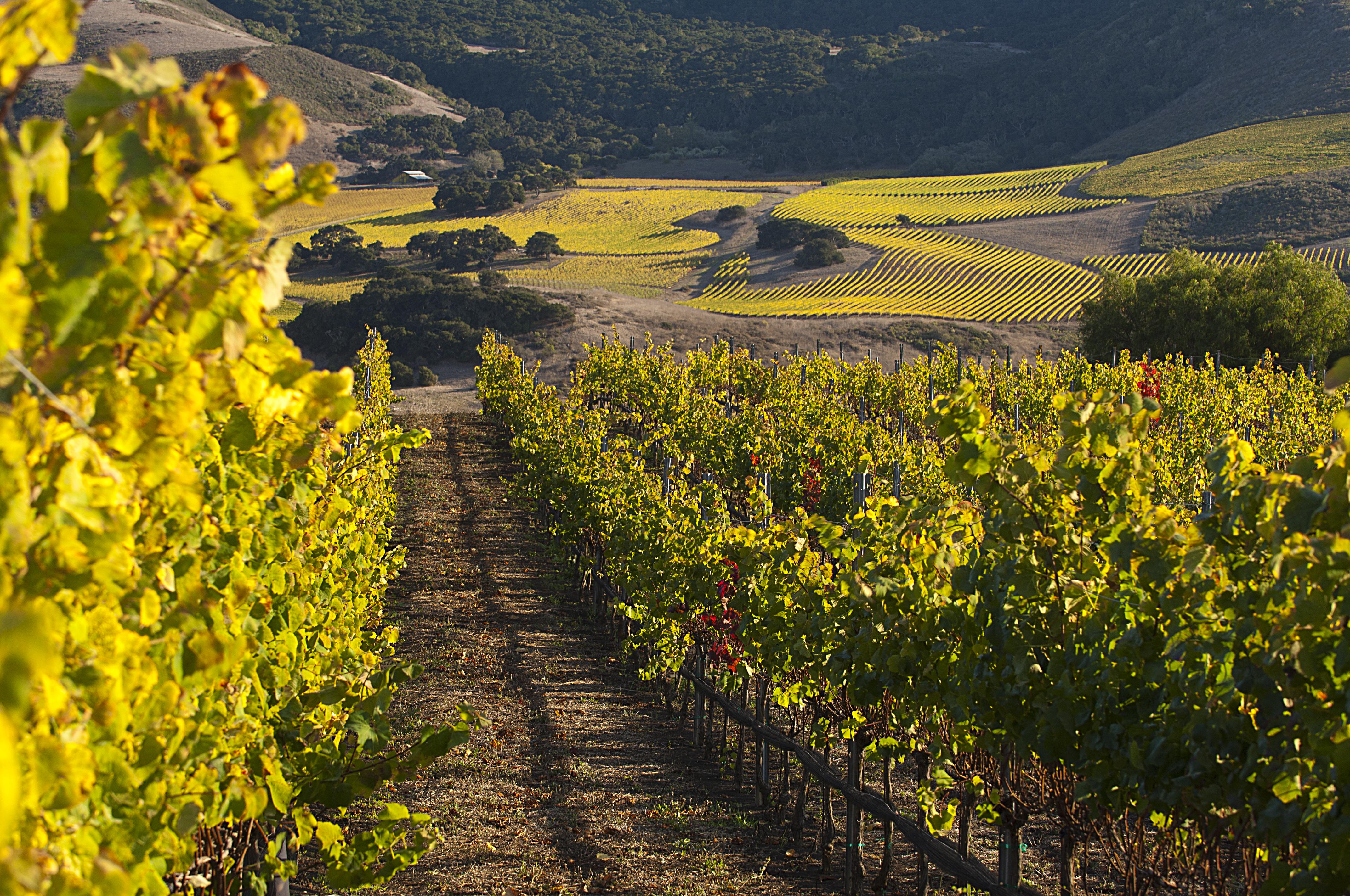 ken brown vineyards ken brown wines
